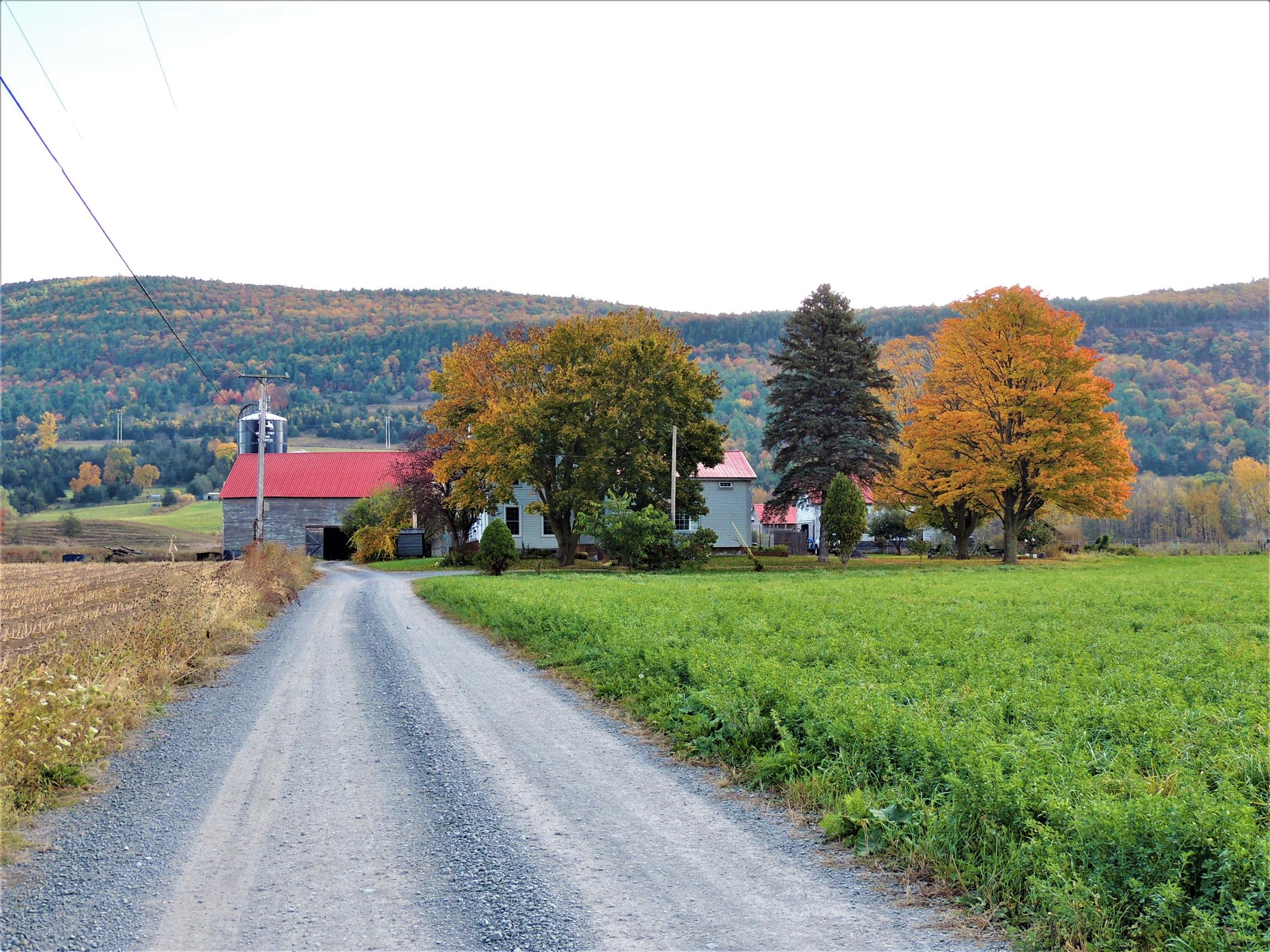 in 168 Middlefort Road, Middleburgh, NY ,12122